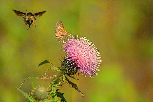 Fly By Bee by Rick Friedle
