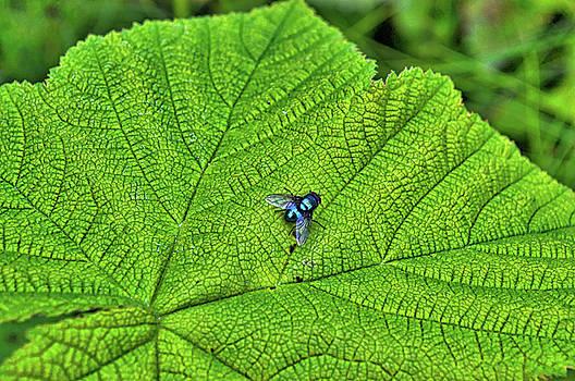 Fly by Cathy Mahnke