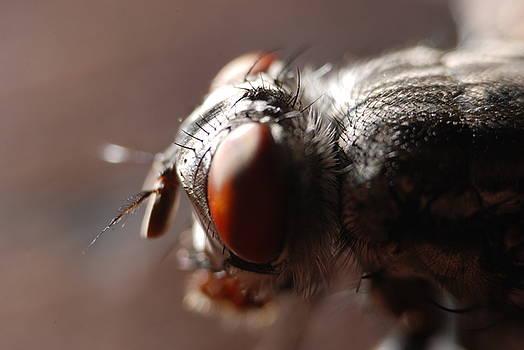 Fly by Dave Fischer
