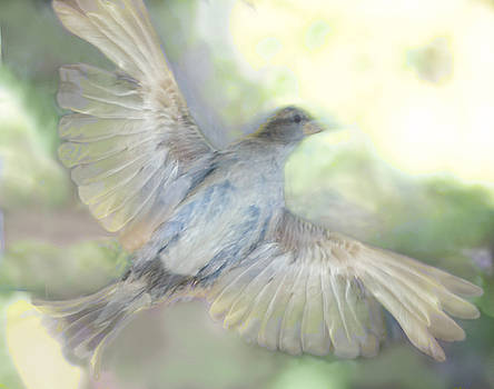 Flying bird by Jim Wright