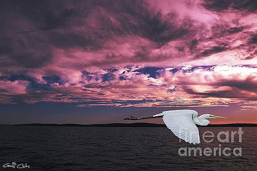 Flying Egret in Sea Sunset  Original Exclusive Photo Art. by Geoff Childs