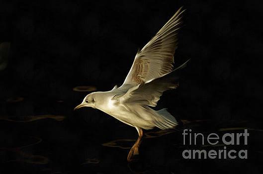 Flying Gull Above Water by Michal Boubin