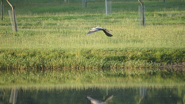 Flying over the pond by Danny Jones