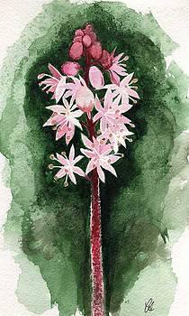 Foam Flower by Carrie Auwaerter