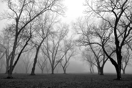 Fog 3 by Beverly Hammond