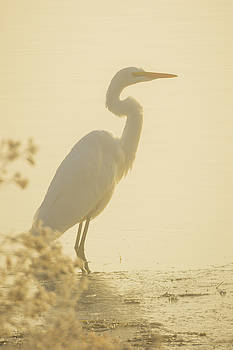 Fog Frost and a Great Egret at sunrise  -  150915-022 by Albert Seger