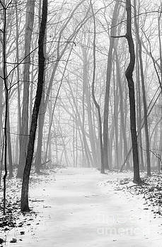 Fog In The Woods by Tamara Becker