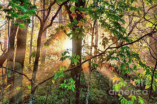 Dan Carmichael - Foggy Autumn Morning Sunrise