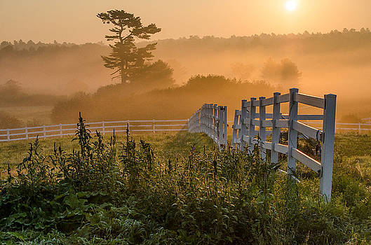Foggy Fence by Paul Noble