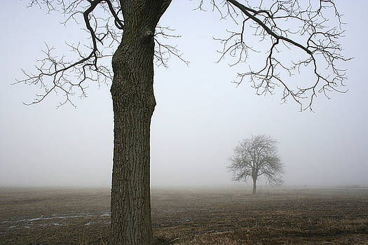 Foggy Field by Kathy Stanczak