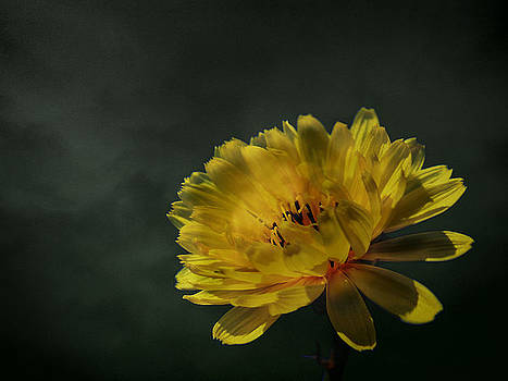 Foggy Flower by Gulf Island Photography and Images