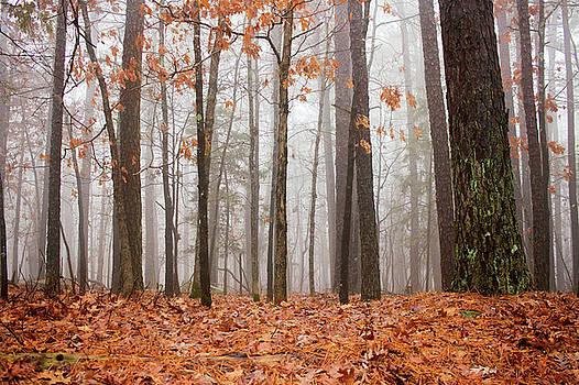 Foggy Forrest by Tammy Chesney