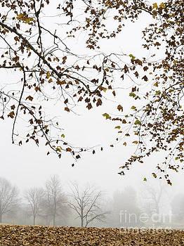 Foggy Morning at the Lake by Tamara Becker