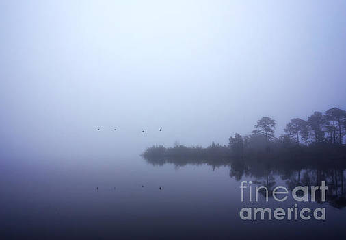 Foggy Morning Fly By by Joan McCool
