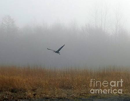 Foggy Morning Heron in Flight by Helen Campbell