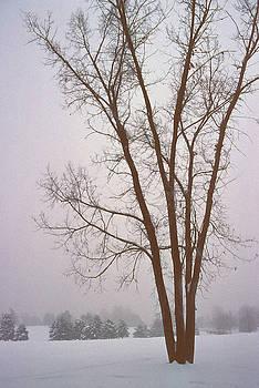 Steve Ohlsen - Foggy Morning Landscape 13