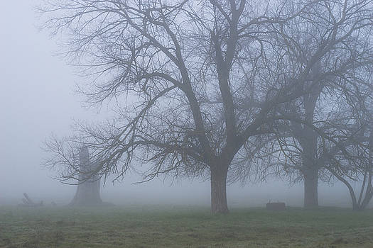 Foggy Morning by Randy Bayne