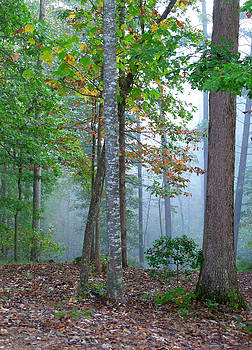 Foggy Morning by Rosie Brown