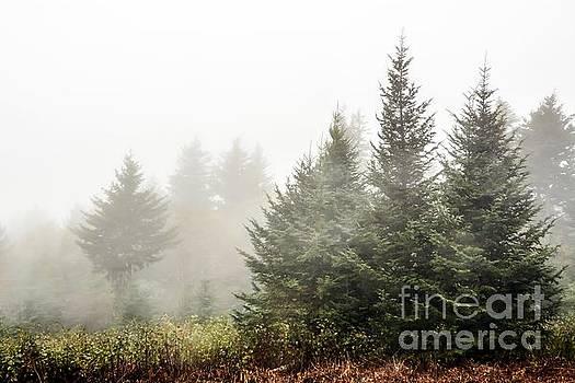 Foggy Mountain High by Debbie Green