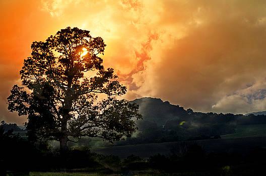 Foggy Sunrise by Marty Koch