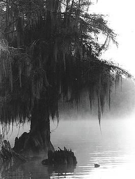 Foggy Swamps by Joy Tudor