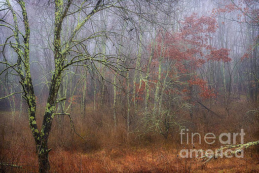 Foggy Wildlife Management Area by Thomas R Fletcher