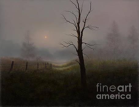 Foggy Woods by Sena Wilson