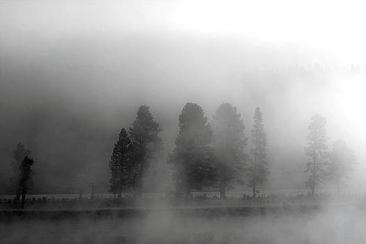 Foggy Yellowstone by Kimberly Oegerle