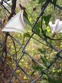 Foliage on the Fence by MaryEllen Frazee
