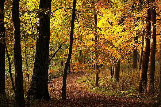 Rosanne Jordan - Follow the Autumn Path