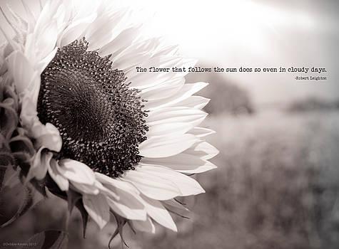 Follow the Sun by Debbie Karnes