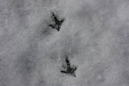 Yvonne Ayoub - Footprints in the Snow