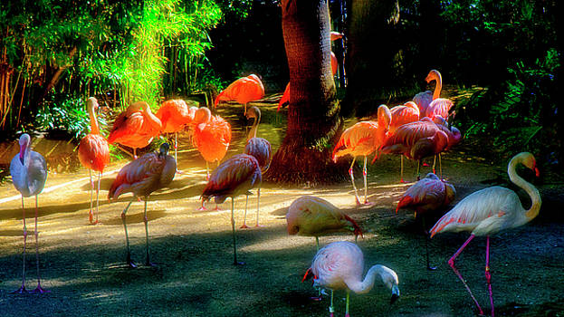 For Exhibition Only Flamingos by Joseph Hollingsworth