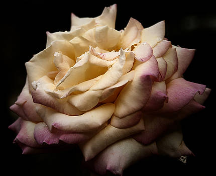 For Rose Lovers by Barbara Middleton
