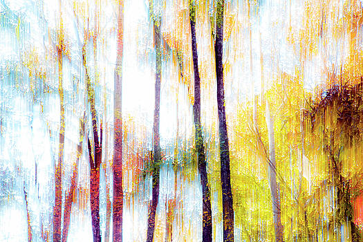 Forest Abstract 1 by Tiffany Dawn Smith