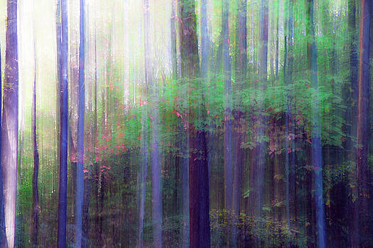 Forest Abstract 3 by Tiffany Dawn Smith