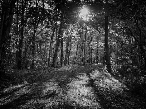 Forest Daybreak by GJ Blackman