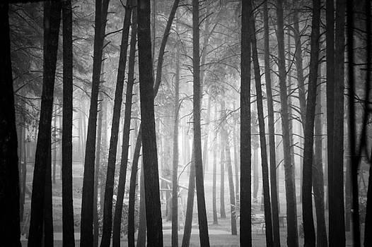 Forest by Dorit Fuhg