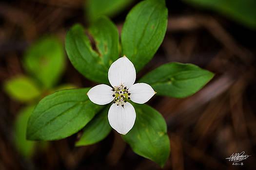 Forest Flower by Adnan Bhatti