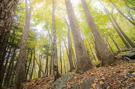 Forest Glow by Debbie Karnes