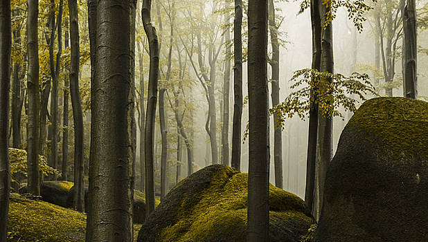 forest II by Lukas Holas