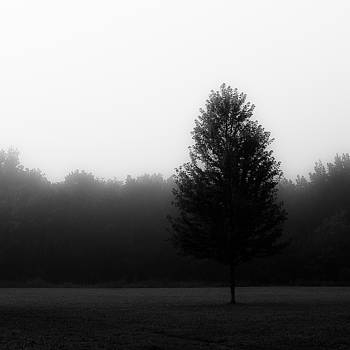 Forest In Fog 007 by Noah Weiner