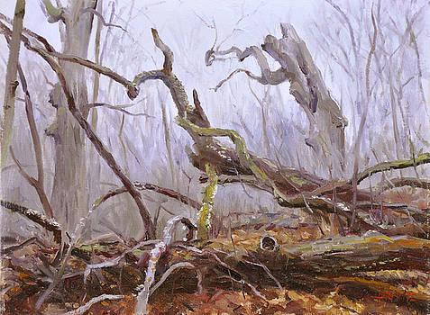 Forest in November by Scott Harding