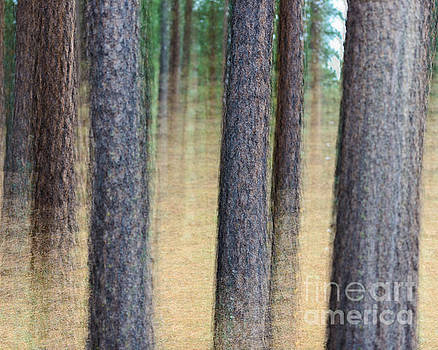 Trees by Terry Garvin