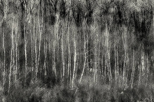 Forest Layers - A Semi Abstract  by Thomas Schoeller