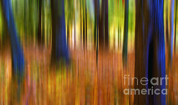 Forest Motion  by Deena Athans