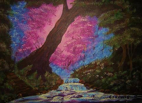 Forest Of Wonder by Cynthia Farmer