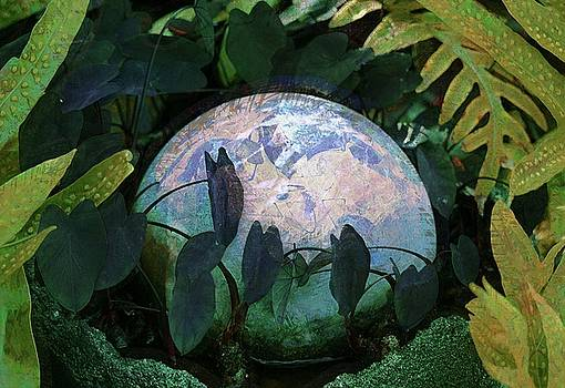 Forest Orb by Lori Seaman