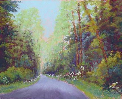 Forest Road by Nancy Jolley