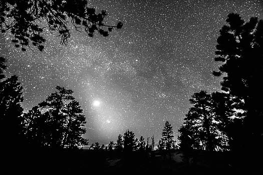 James BO  Insogna - Forest Silhouettes Constellation Astronomy Gazing